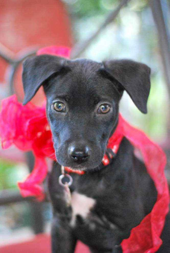 Southside pets available for Aug. 21, 2014 _lowres