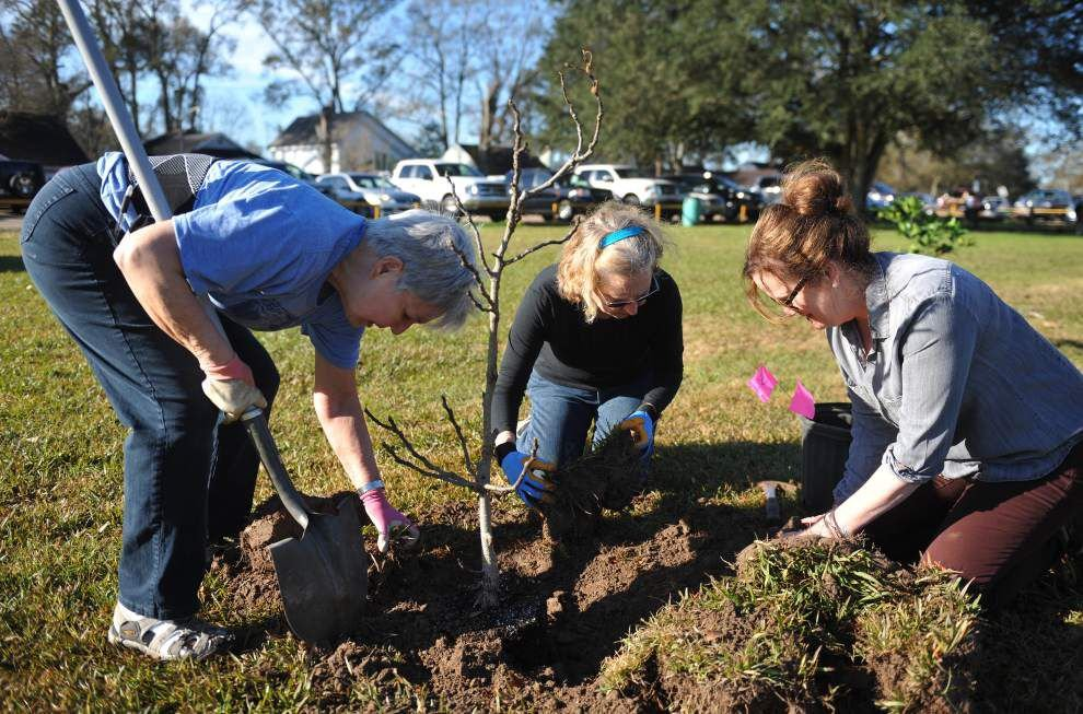 TreesAcadiana volunteers plant 'food forest' of fruit trees at park in honor of Arbor Day _lowres
