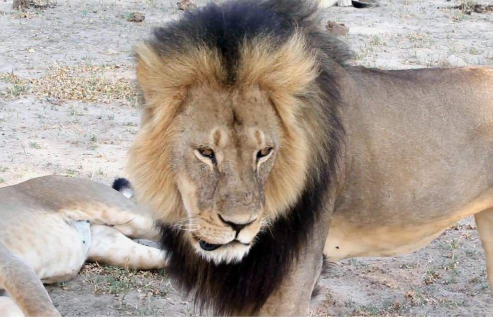 Video report: Louisiana dentist receives threats after being mistaken for man who killed Cecil the lion _lowres