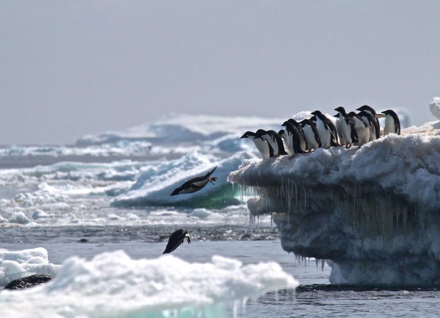Incredible penguin population discovered in Antarctica with help of LSU professor