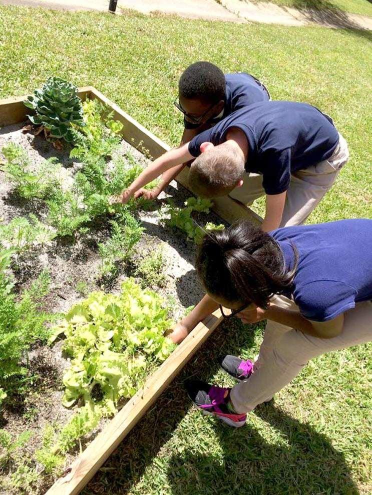 Jackson Elementary Students learn gardening basics _lowres