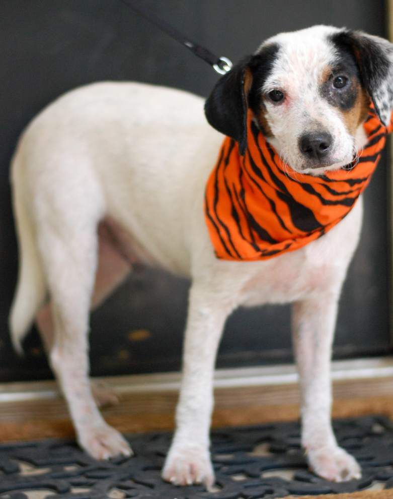 Mid City dogs available for Sept. 17, 2015 _lowres