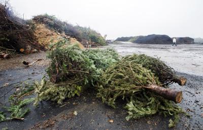ACA.treerecycling05.adv