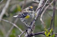 Louisiana 2020 Christmas Bird Count List Louisiana birdwatchers count birds, along with blessings, during