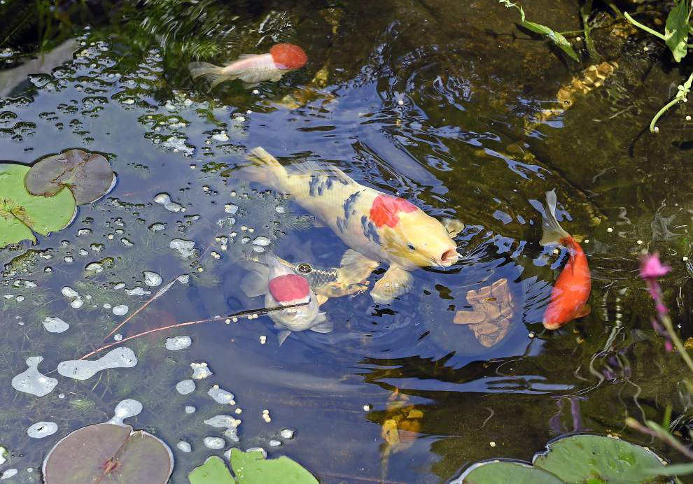 Water worlds: Baton Rouge backyard oasis a must-see on pond tour _lowres