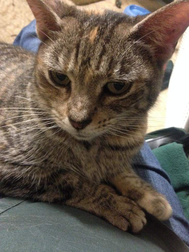 Southside cats available for March 12, 2015 _lowres