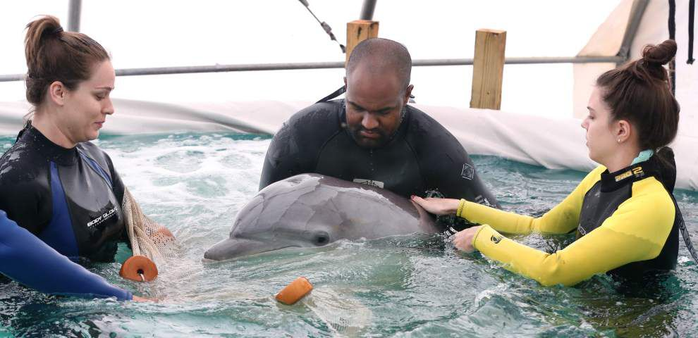 Video: Stranded dolphin now one step closer to being released into wild, Audubon Institute says _lowres