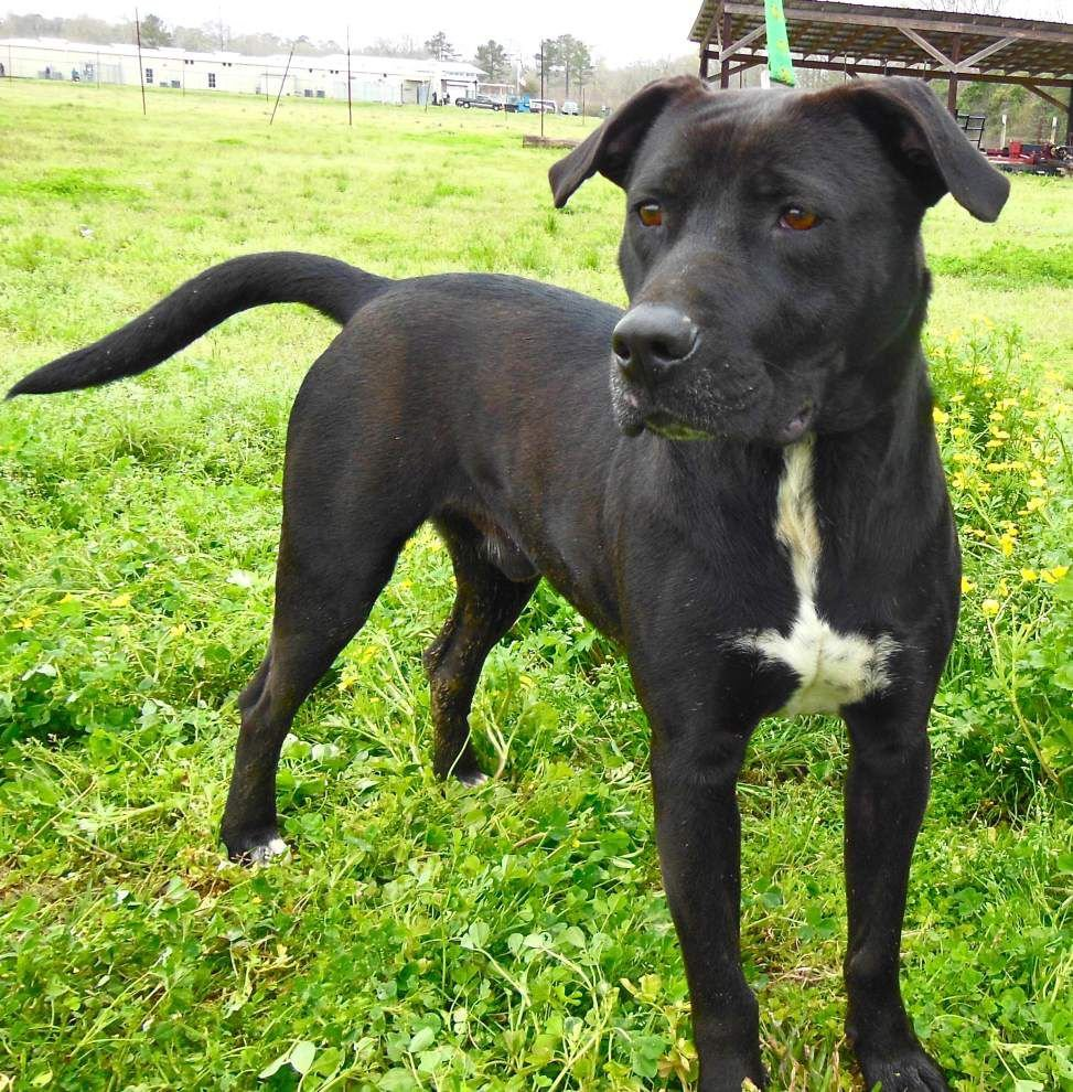 West Feliciana pets available for March 26, 2015 _lowres
