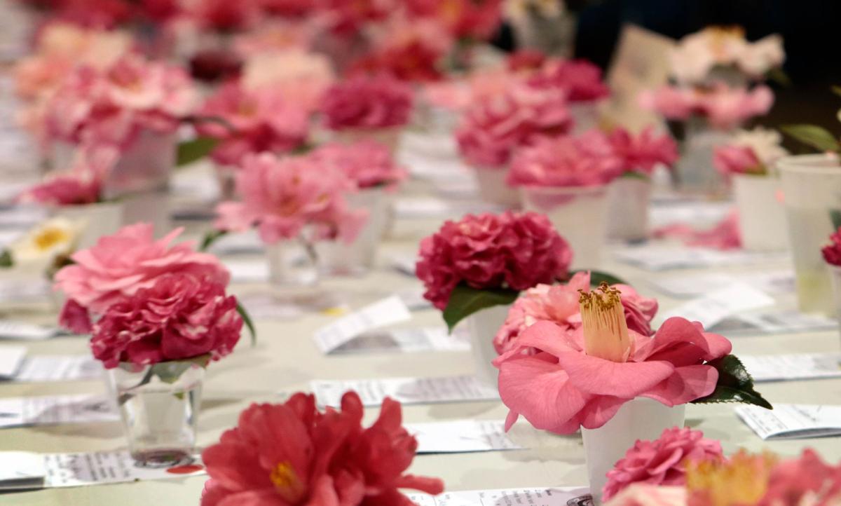 camelliashow.jpg