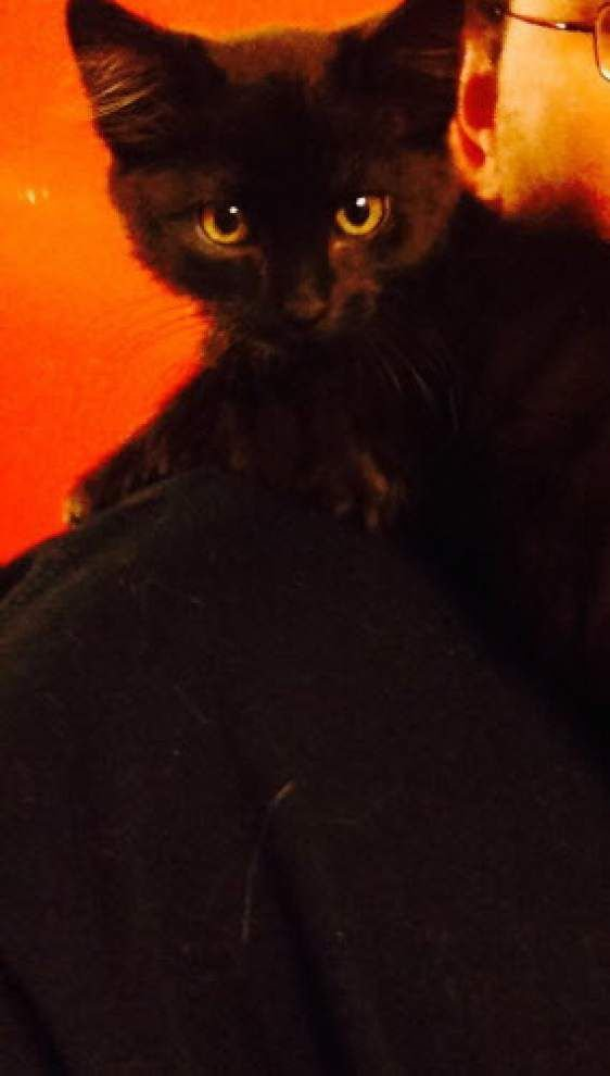 Southeast cats available for Nov. 27, 2014 _lowres