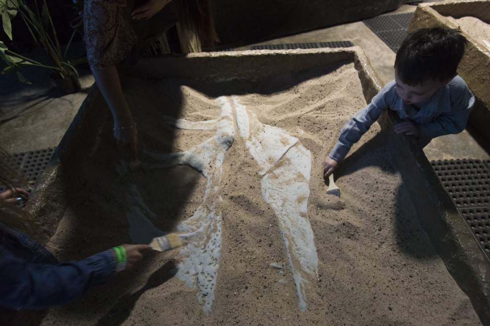 14-foot camel? Lafayette museum receiving replica of one based on 7-million-year-old fossils unveiled Monday _lowres