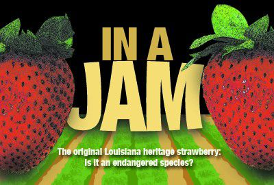 Preserving the Louisiana heritage strawberry_lowres