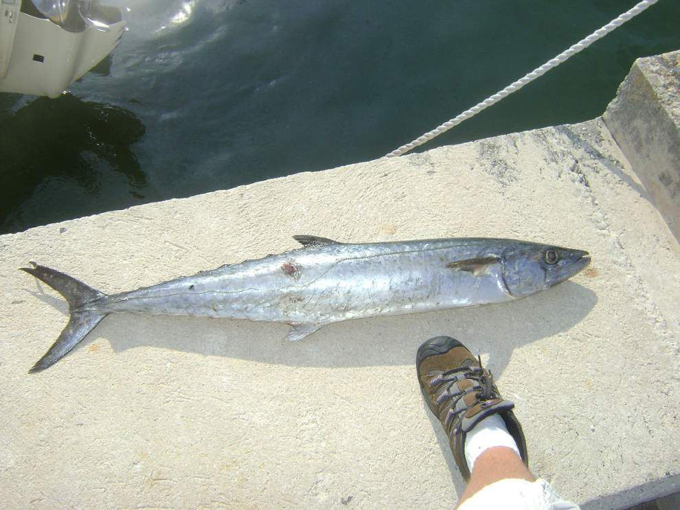 King mackerel season to close Friday in western Gulf _lowres