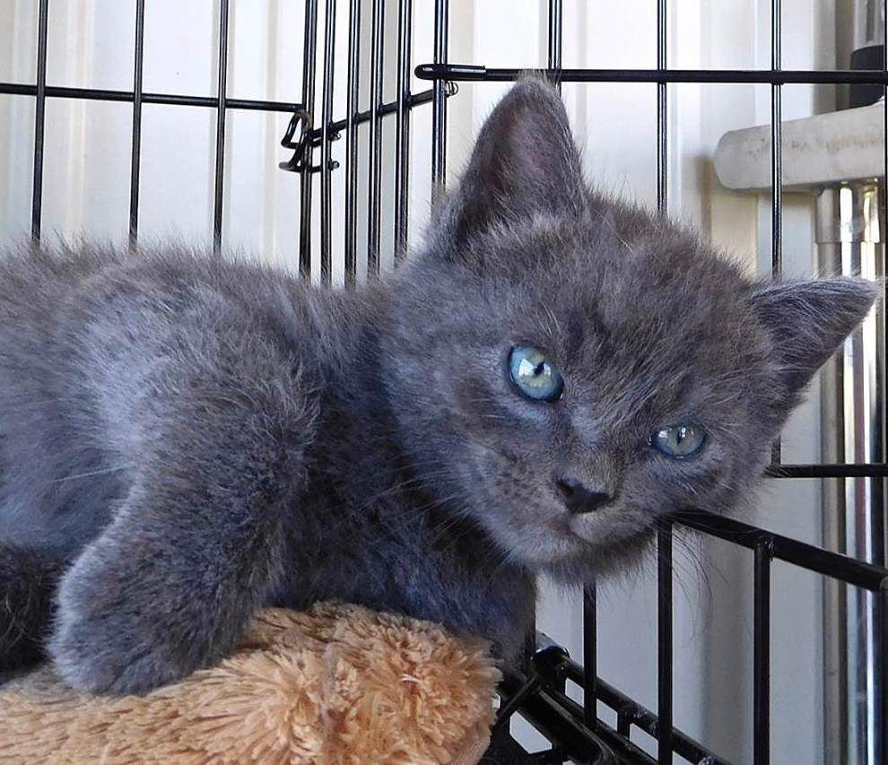West Feliciana pets for June 2, 2016 _lowres
