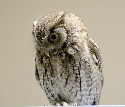 owl times.jpg