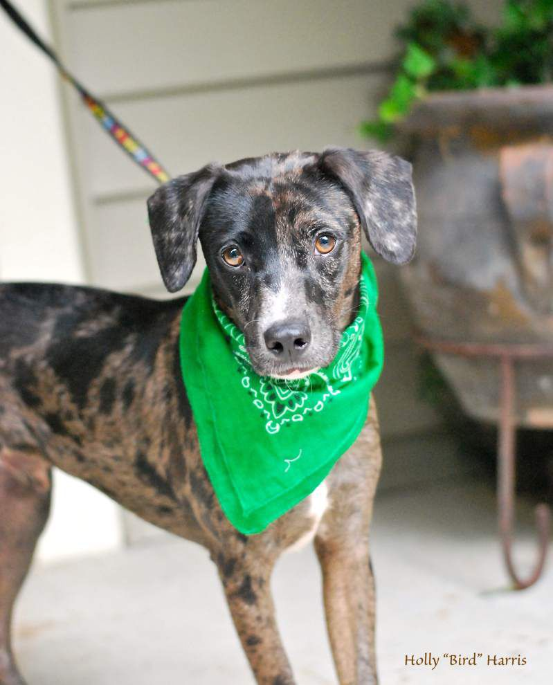 Southside pets available for Sept. 25, 2014 _lowres