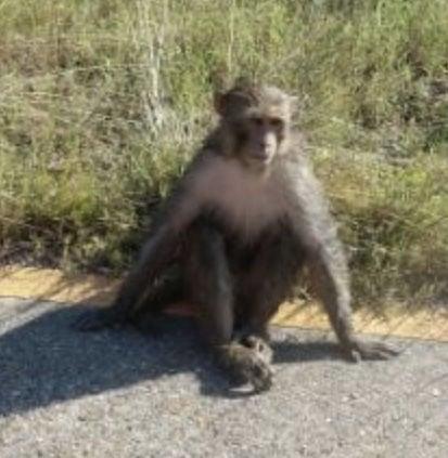 ACA.monkeyfound.091818