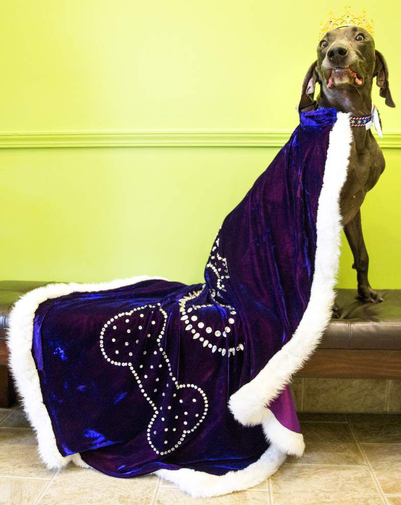 Canines crowned for Mystic Krewe of Barkus _lowres