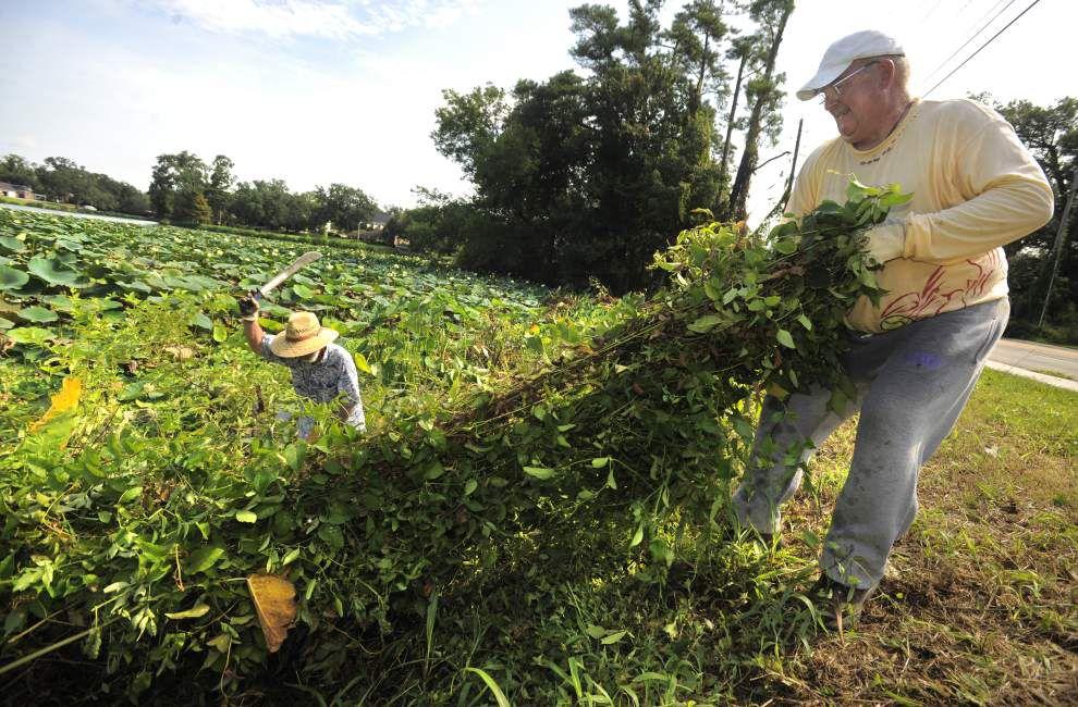 Lakes clean-up volunteers hope to snag grant _lowres