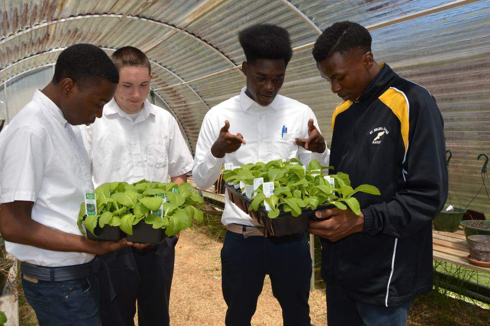 FFA gears up for plant sale _lowres