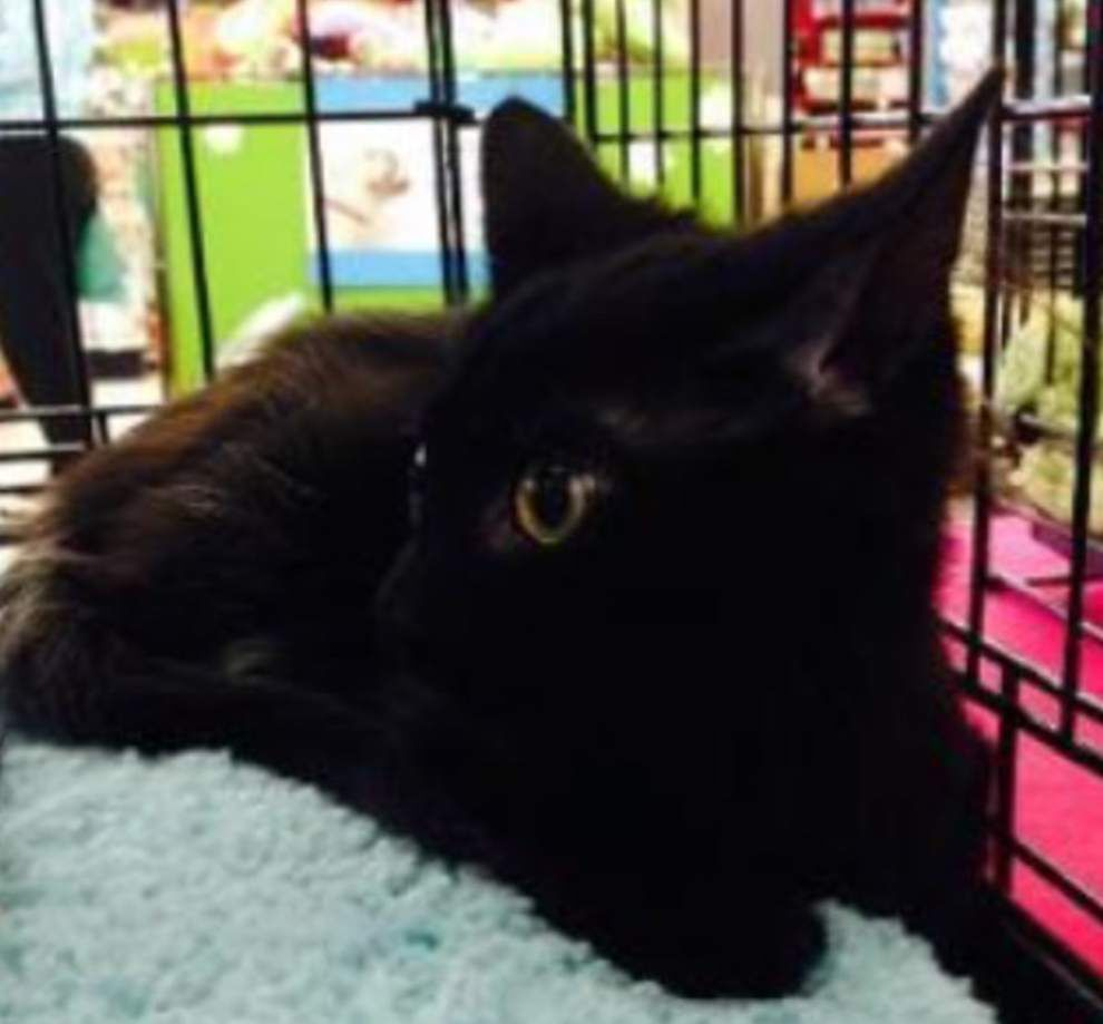 Southeast cats available for Jan. 1, 2015 _lowres