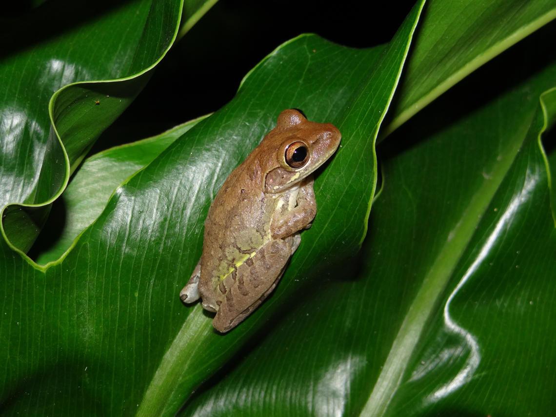 Baby Frog Food