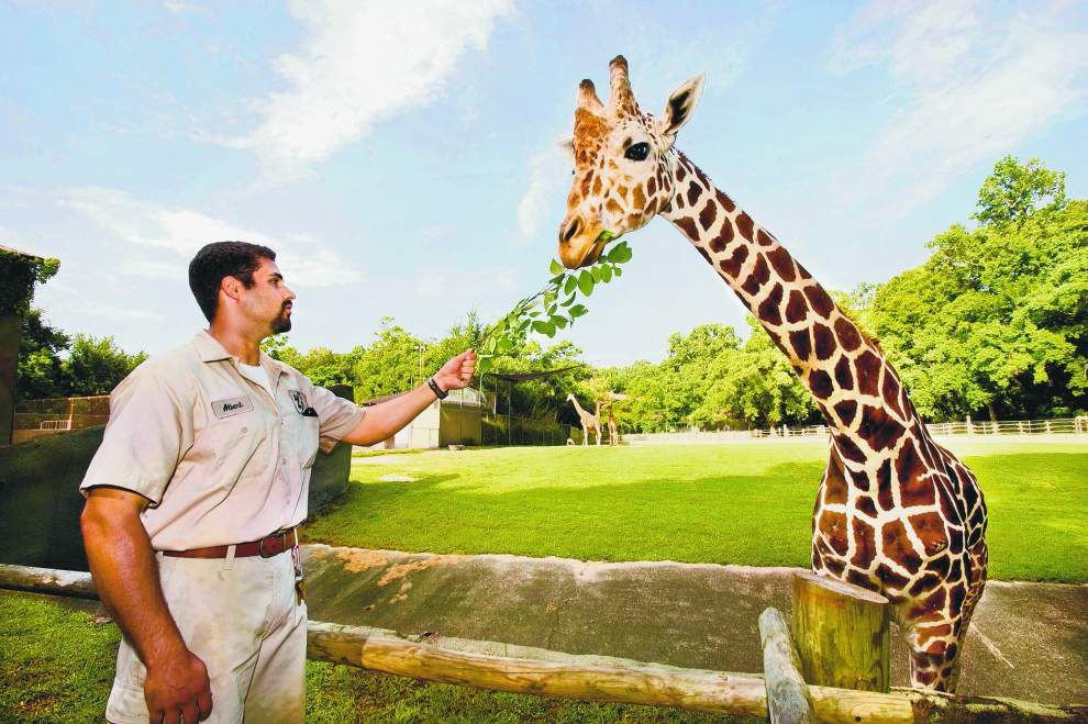 Changes anticipated for Baton Rouge Zoo, even if officials don't try to move it _lowres