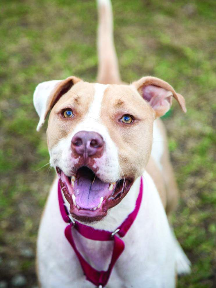 Animal Rescue: Allergy season can affect pets, too _lowres