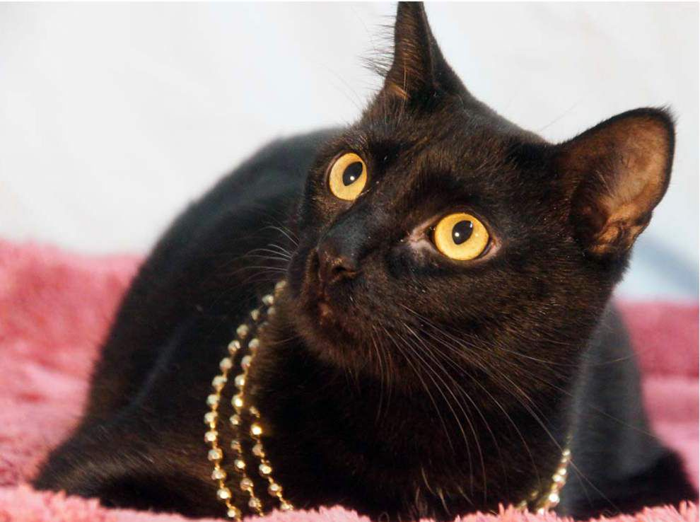 Animal Rescue of New Orleans: Midnight Express event to highlight Adopt a Black Cat month _lowres