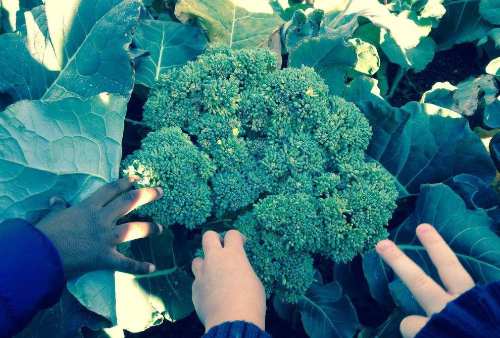 Bains students enjoy 'veggies' of labor _lowres