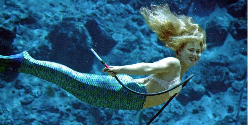 Weeki Wachee Mermaids to swim at Audubon Aquarium_lowres