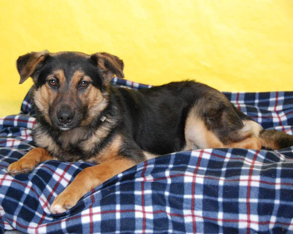 Pen Pals pets for March 10, 2016 _lowres