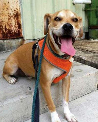 Animal Rescue: 101 Donations is Aug. 21 for City Bark _lowres