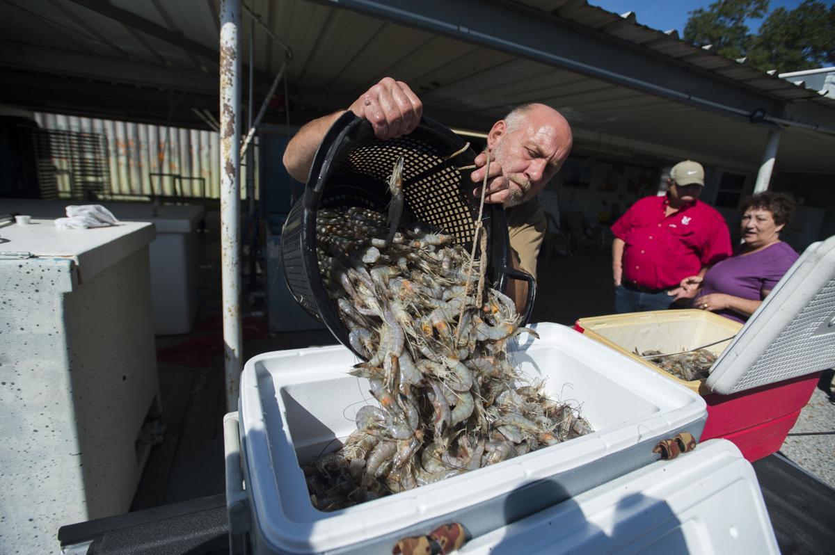 ACA.seafood013.adv