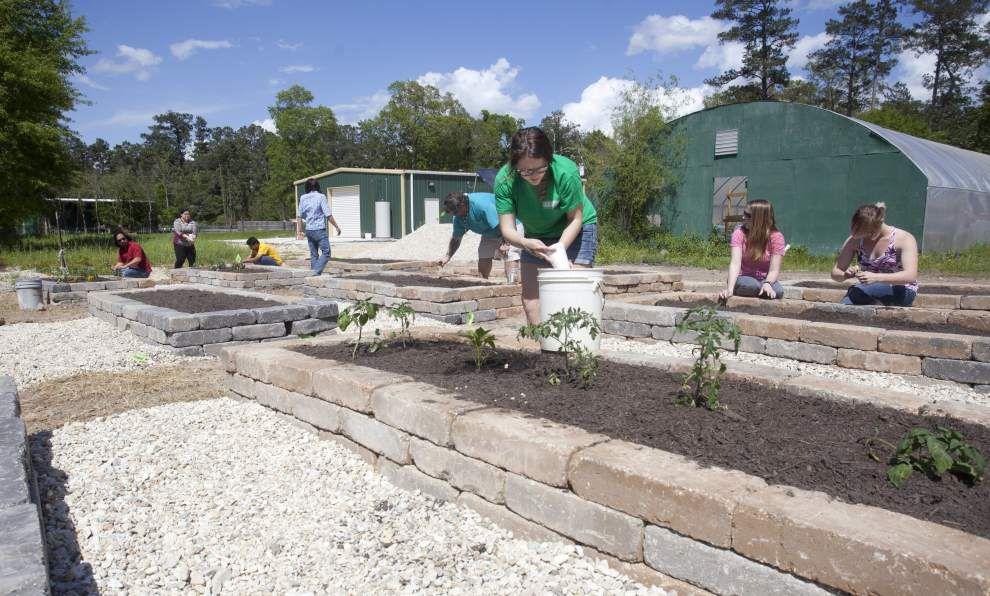 SLU student groups produce community garden _lowres