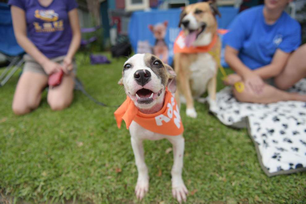Baton Rouge animal shelter group recognized for pet adoptions, awarded $28,800 grant _lowres