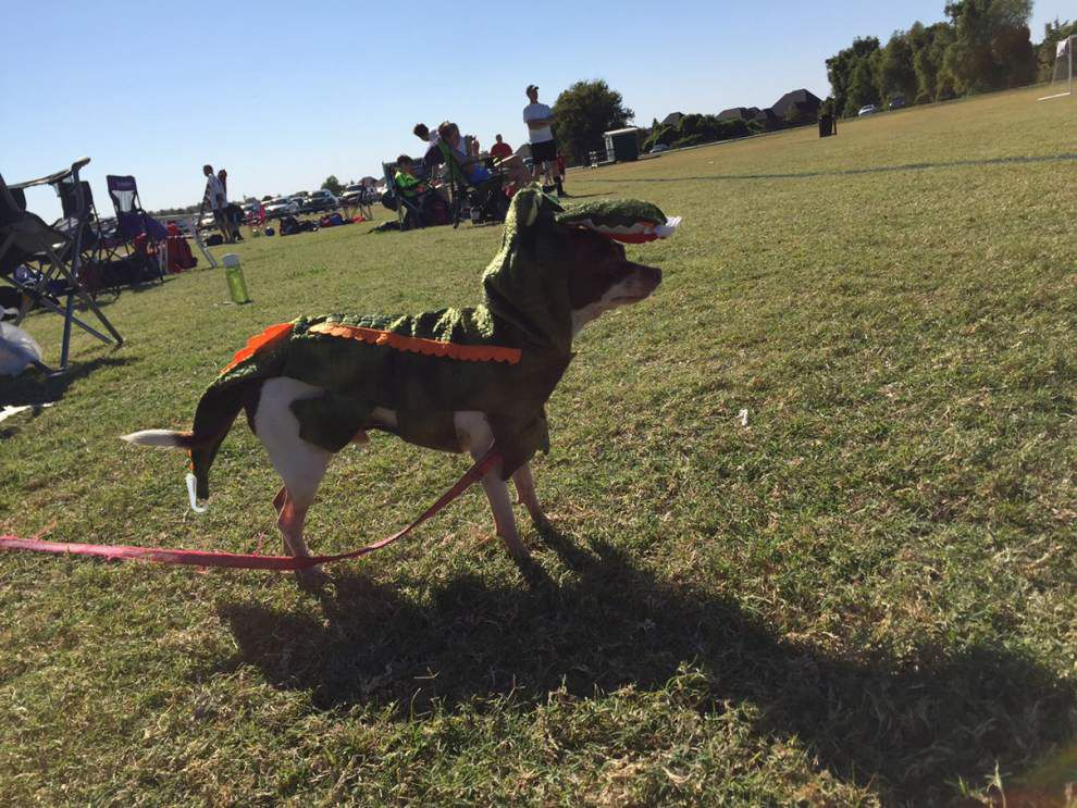 Halloween Unleashed: These furry friends trade a trick for a treat on Halloween _lowres