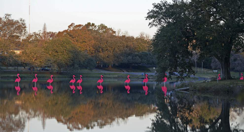Photos: Pink flamingos make annual migration to Baton Rouge -- heralding upcoming Spanish Town Parade _lowres