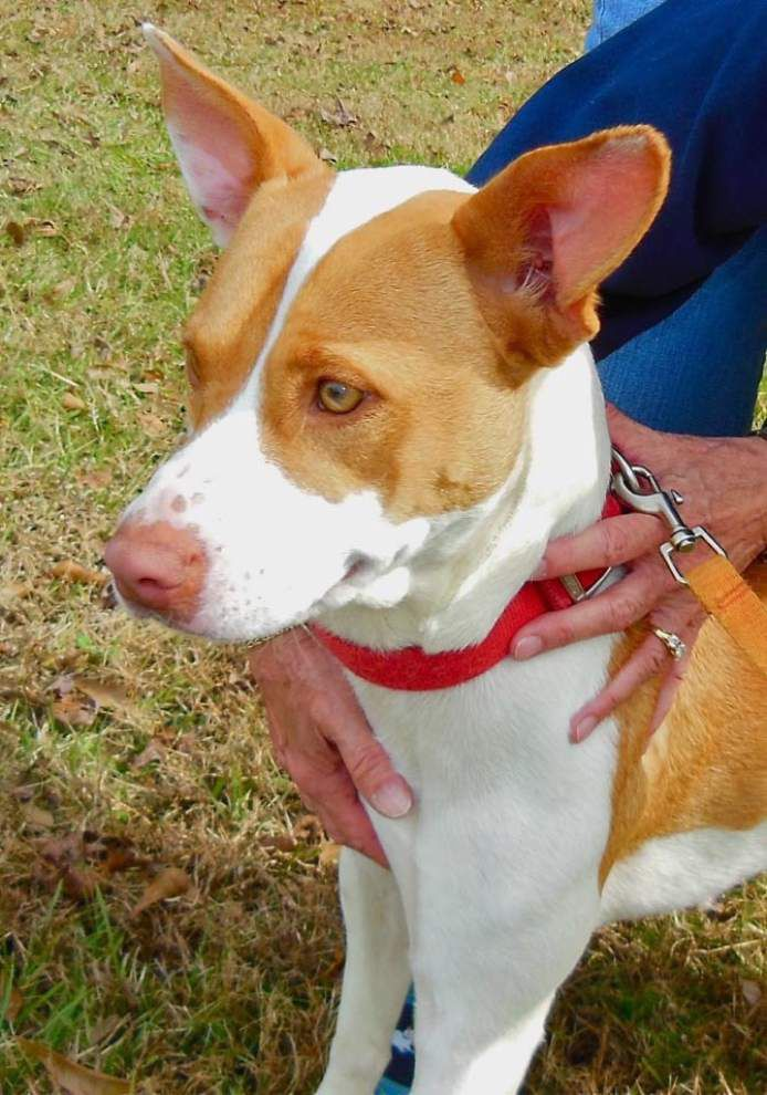 West Feliciana Pets for Dec. 11, 2014 _lowres