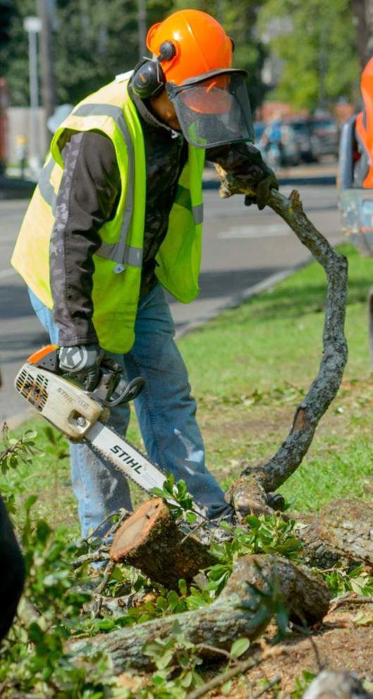 City of New Orleans starts removing damaged oak trees, planting new ones on Esplanade Avenue _lowres