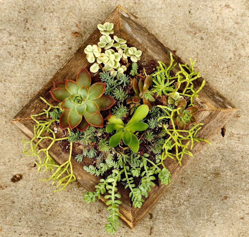 Water-hoarding succulents are built for surviving desert life _lowres