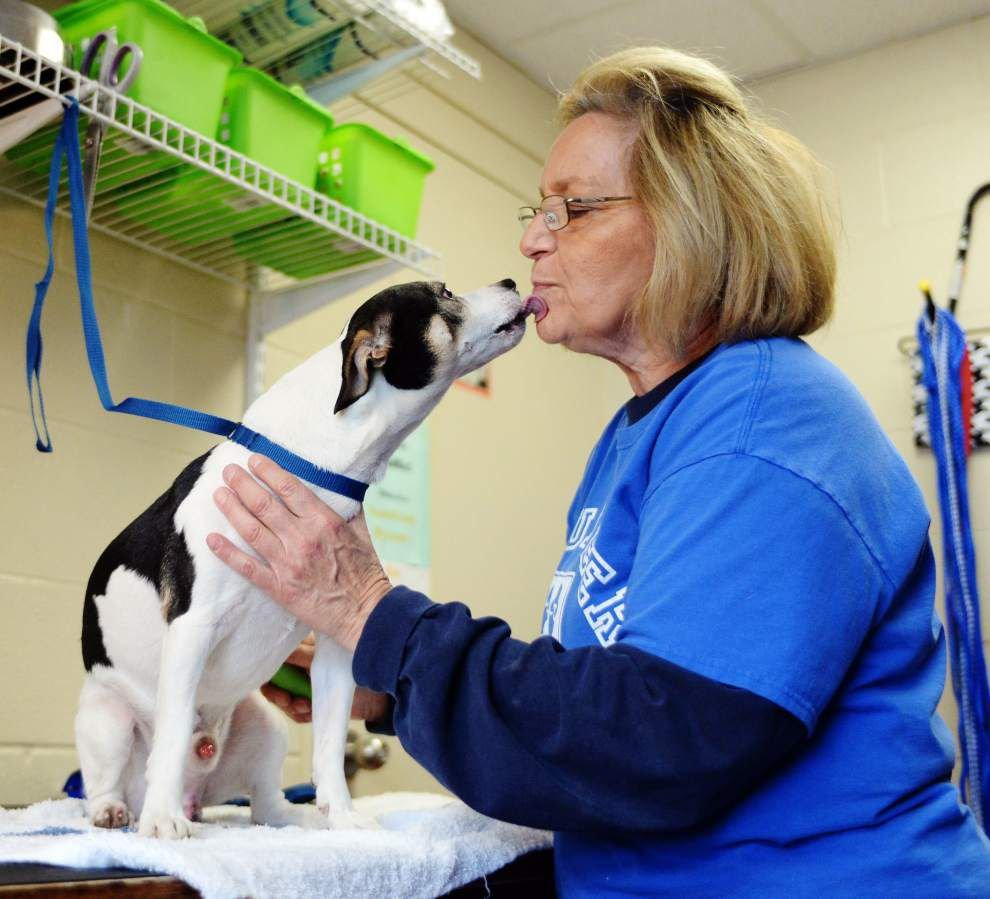 Lafayette sets public meeting to discuss halt to euthanizing healthy cats and dogs _lowres
