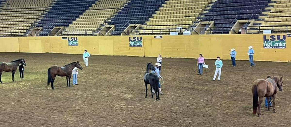 HorseJudging.jpg