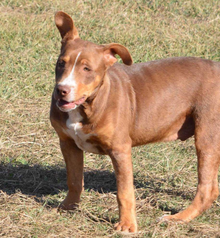 East Feliciana pets available Dec. 11, 2014 _lowres