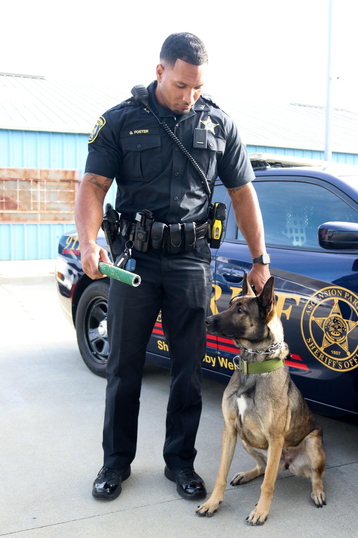 BR.policedogs.adv.02.jpg