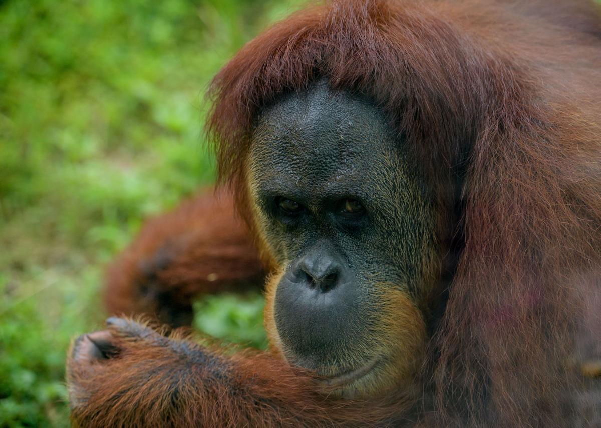 NO.primate.epl.090317.004.JPG
