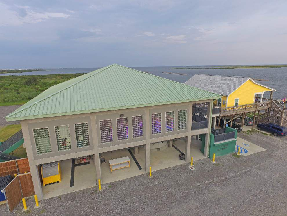 New hatchery likely to double oyster production at LSU's Grand Isle site, be something 'every citizen in Louisiana will benefit from' _lowres
