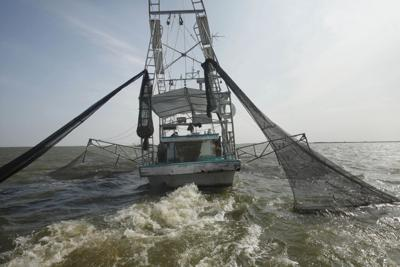 Gulf Oil SPill Shrimpers Under Pressure