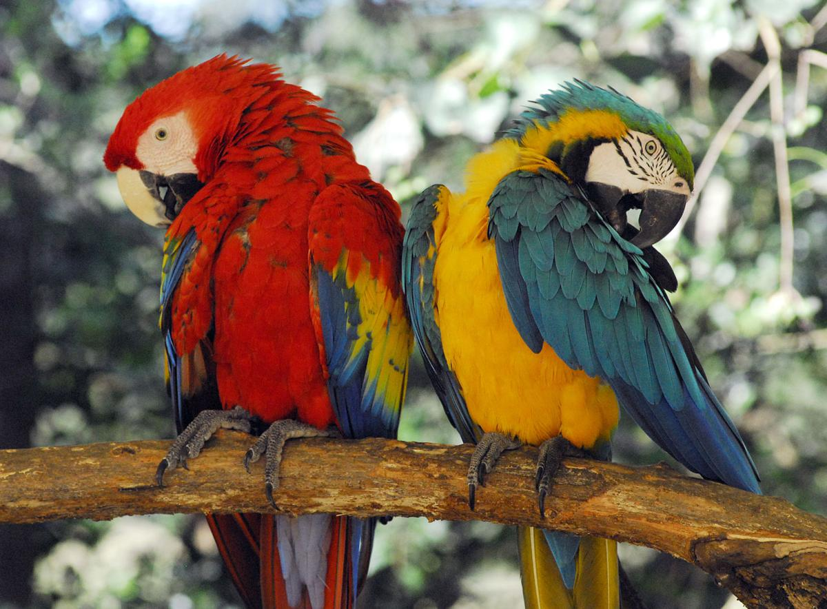 Sloths, macaws, kangaroos, more: Rural East Feliciana zoo ...
