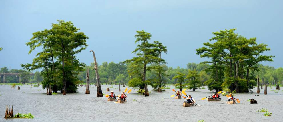 Report attempts to provide information to help manage cypress forests along Louisiana's coast _lowres